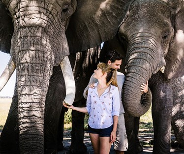 Photo of Walk with Elephants